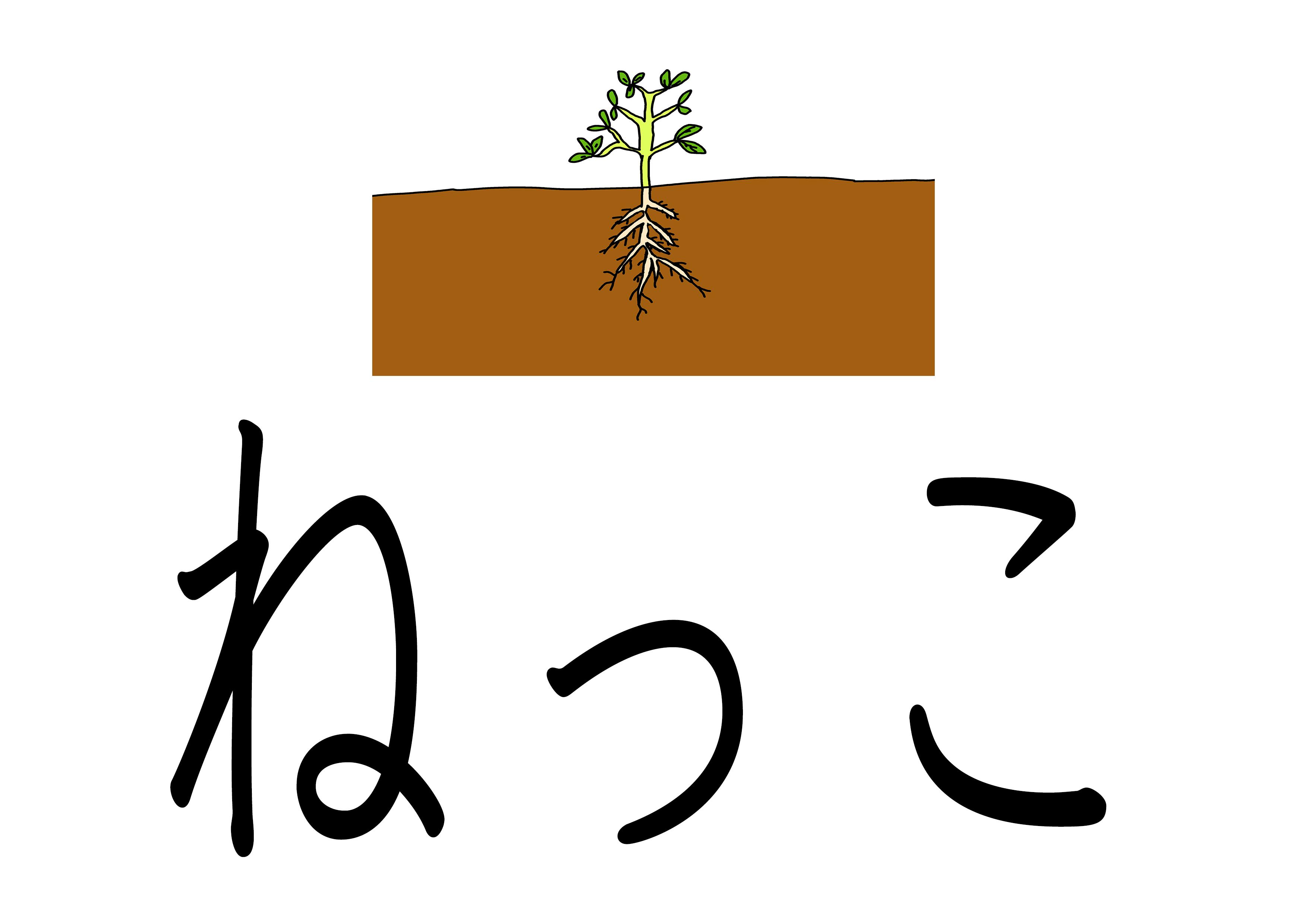 ひらがなイラスト【ねっこ】