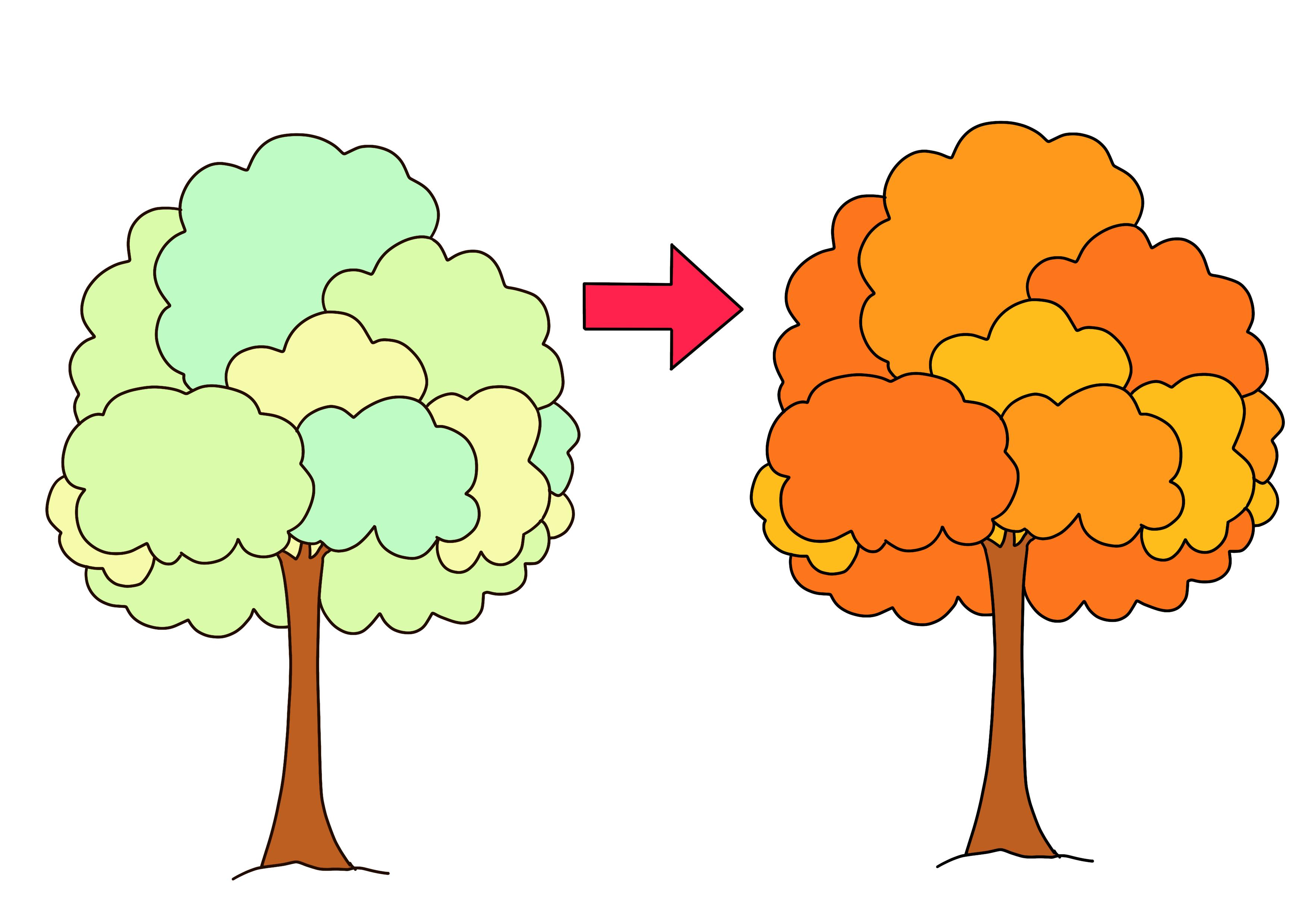 35課イラスト【木の葉の色が変わる】