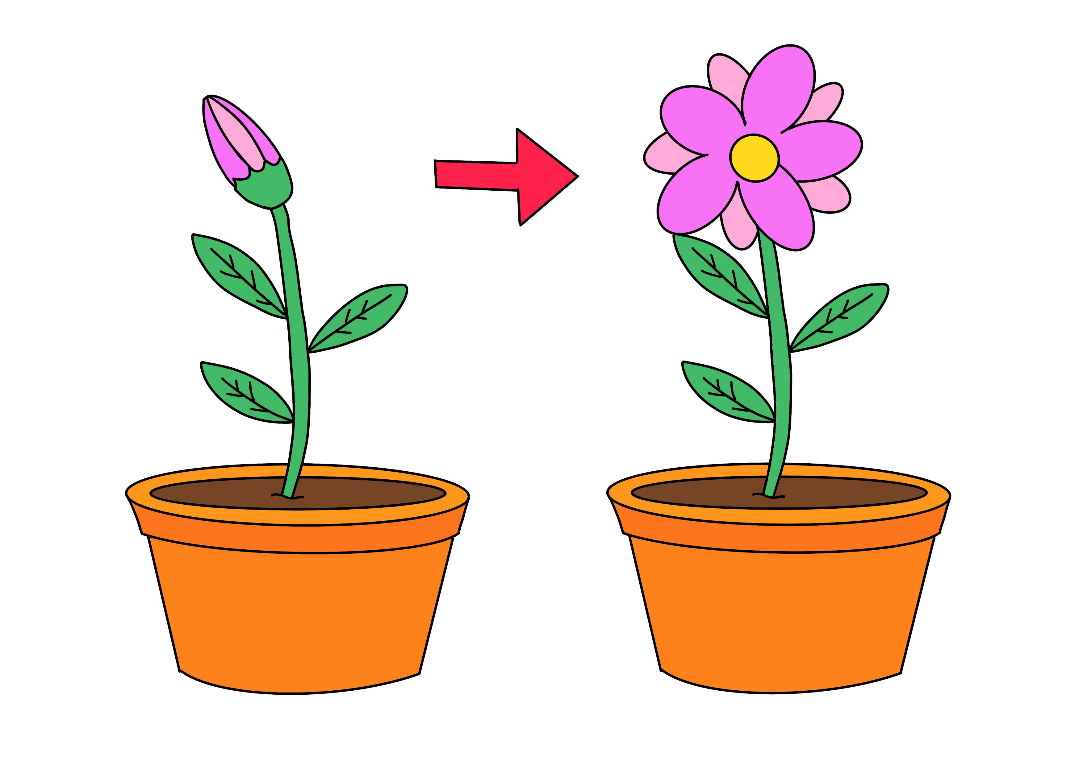 35課イラスト【花が咲く】
